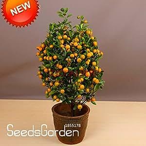 Promotion!100pcs/Pack Balcony Patio Potted Fruit Trees Planted Seeds Kumquat Seeds Orange Seeds Tangerine Citrus,#VXAJ0A