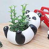 Messagee Cute Panda Succulent Pots with Drainage Resin Mini Flower Pot Garden Plants Vase Desk Flower Decoration