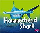 Hammerhead Shark, Deborah Nuzzolo, 1429617284