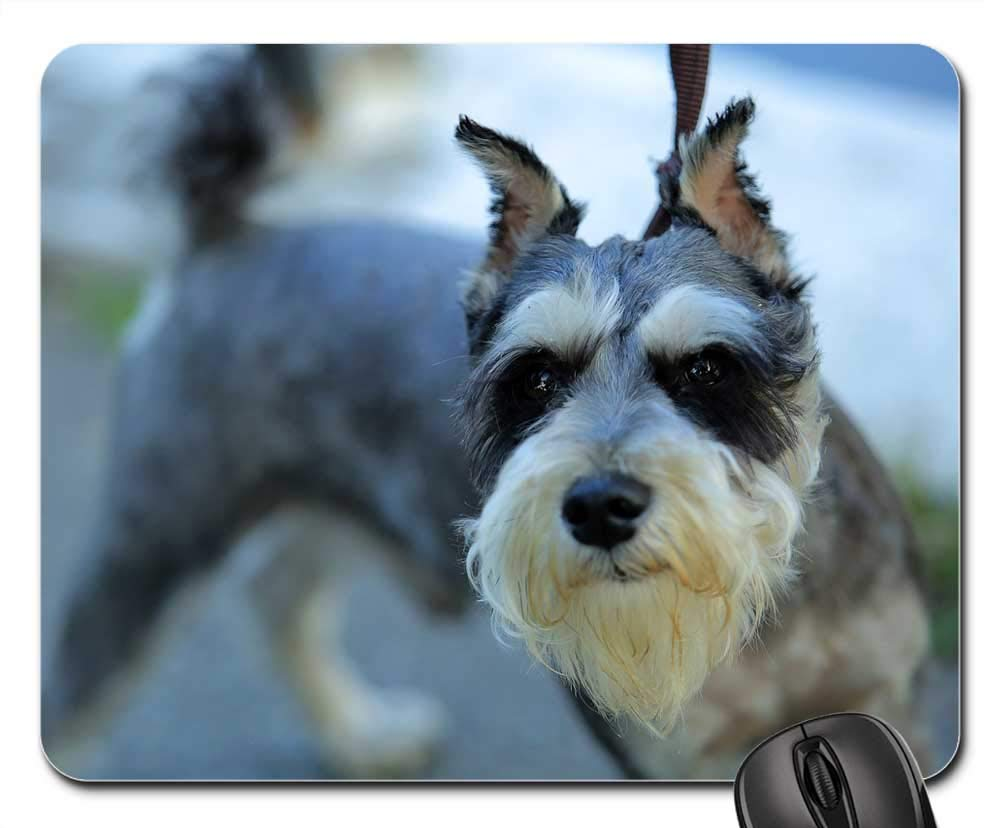 Amazoncom Mouse Pads Dog Long Hair Black Ear Office