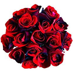 12 Stems - Fresh Cut Black & Red Roses from Flower Explosion for Valentine's Day