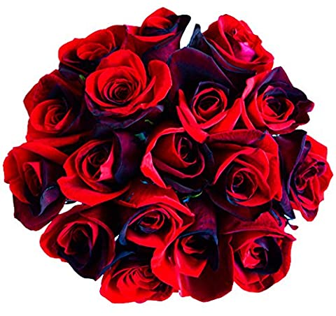 12 Stems - Fresh Cut Black & Red Roses from Flower Explosion