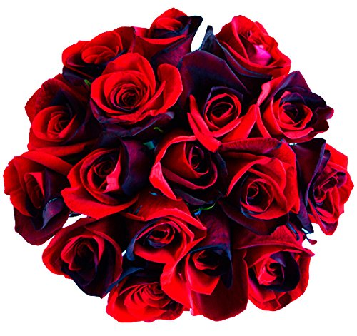 Dozen Premium Red Roses Bouquet - 12 Stems - Fresh Cut Black and Red Roses from Flower Explosion