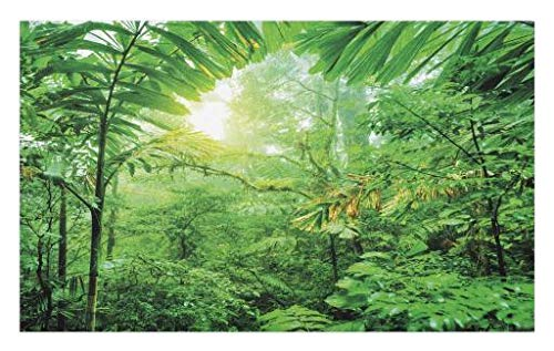 Lunarable Nature Doormat, Fresh Green Rainforest in National Park of Costa Rica Tropical Wilderness Jungle Photo, Decorative Polyester Floor Mat with Non-Skid Backing, 30