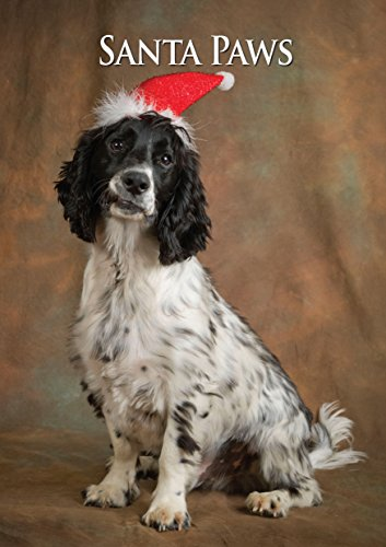 Cocker Spaniel Dog Christmas Card. Large A5 Seasonal Greeting Card with Scarlet Envelope. Perfect for Dog Lovers