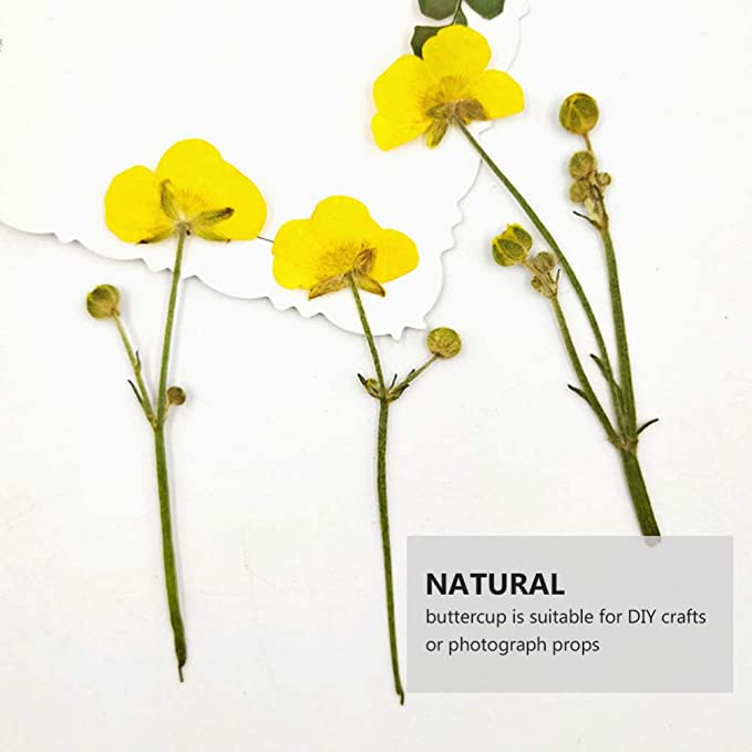20 pieces Ranunculus flowers Real pressed flowers Yellow dried flowers