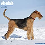 Airedale Calendar - Dog Breed Calendars - 2017 - 2018 wall Calendars - 16 Month by Avonside
