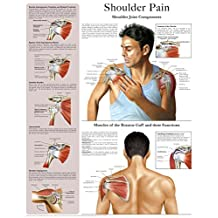 Shoulder Pain e-chart: Quick reference guide