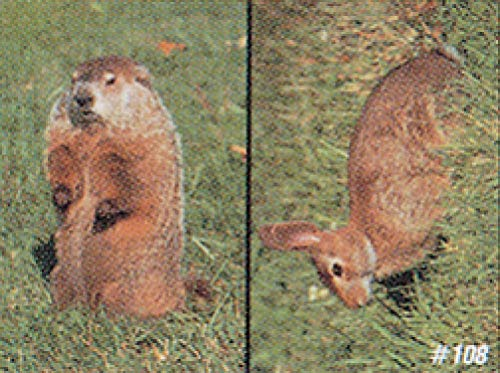 Delta Tru-Life Paper Targets - Woodchuck/Cottontail