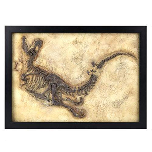 Dinosaur Fossil Pictures - 14.5