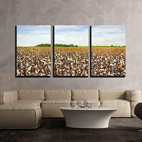 wall26 - 3 Piece Canvas Wall Art - Cotton Field Ready for Harvest - Modern Home Decor Stretched and Framed Ready to Hang - 16
