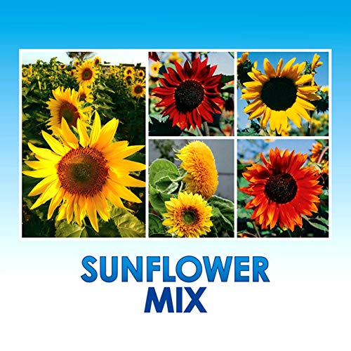 Sunflower Wildflower Seeds Mix Bulk + 8 Bonus Gardening eBooks, Open-Pollinated Wildflower Seed Mix Packets, Non-GMO, No Fillers, Annual, Perennial Wildflower Seeds, Year Round Planting - 1 oz (Best Seed To Plant For Deer)