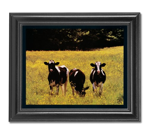 Holstein Cows Eating Grass Cabin Farm Wall Picture Framed Art Print