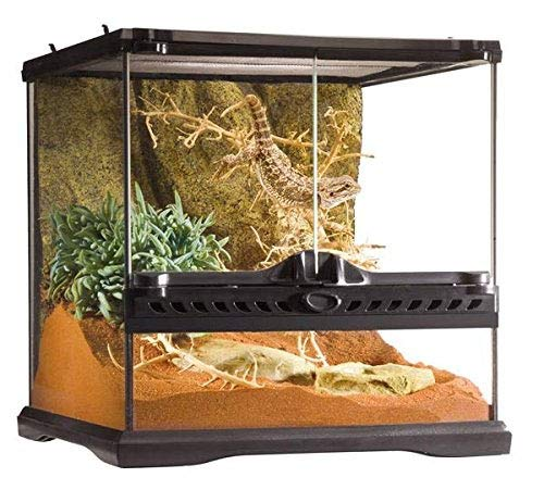 Exo Terra Glass Reptile Terrarium, 12 by 12 by 12 inch