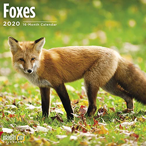 2020 Foxes Wall Calendar