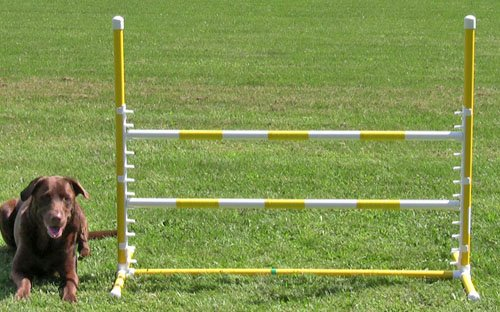 Affordable Agility Yellow Competition Adjustable Jump
