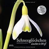 Schneeglöckchen: Zauber in Weiß. - Über dreihundert Sorten im Fotoporträt -