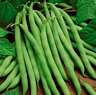 Green Bean Seeds - 50 Count - Type: Blue Lake Bush - (Isla's Garden Seeds) - Non GMO - Total Quality!