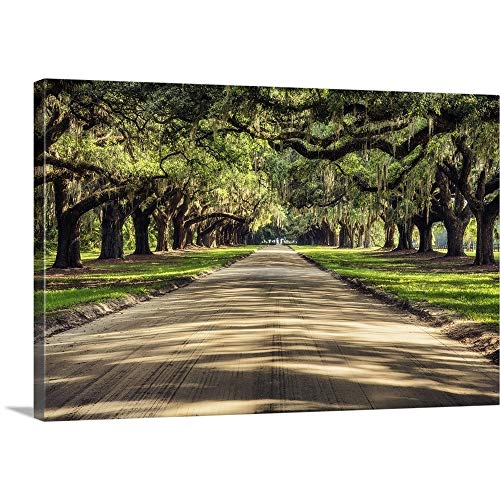 "Oak Tree Lined Road at Boone Hall Plantation, Charleston Canvas Wall Art Print, 36""x24""x1.25"""