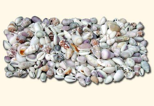 Hinterland Trading Indian Assorted Seashell