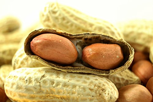 Virginia Peanuts Bulk Inshell Animal Peanuts for Squirrels, Birds, Deer, Pigs and a Wide Variety of Wildlife, 50 Lbs Total/Raw Peanuts/Bulk Nuts/Blue Jays/Cardinals/Woodpeckers/Parrots/Doves by WAKEFIELD PEANUT COMPANY A TRADITION OF EXCELLENCE SINCE 1965 (Image #5)