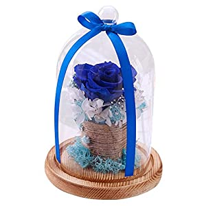 Handmade Preserved Flower, Sacow Never Withered Roses in Glass Romantic Valentine's Day Birthday Gift 110