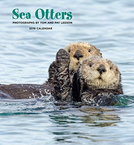 Books : Sea Otters 2019 Calendar
