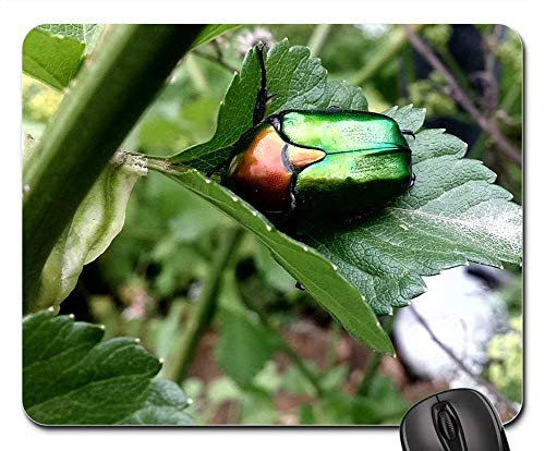 (Mouse Pad - Insect Nature Animal Green Garden Natural Beetle)