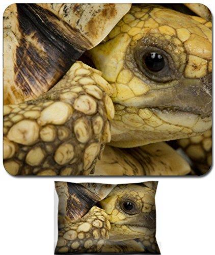 Liili Mouse Wrist Rest and Small Mousepad Set, 2pc Wrist Support IMAGE ID: 3930117 close up of a Burmese Star Tortoise Geochelone platynota
