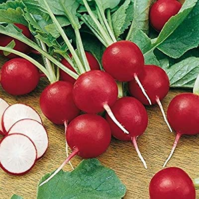 LIODER 10 Pcs Radish Seeds French Breakfast Radish Seeds red White - Vegetable Seeds : Garden & Outdoor