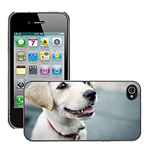Hot Style Cell Phone PC Hard Case Cover // M00130856 Dog Puppy Smile Cute Pet Dogs // Apple iPhone 4 4S 4G