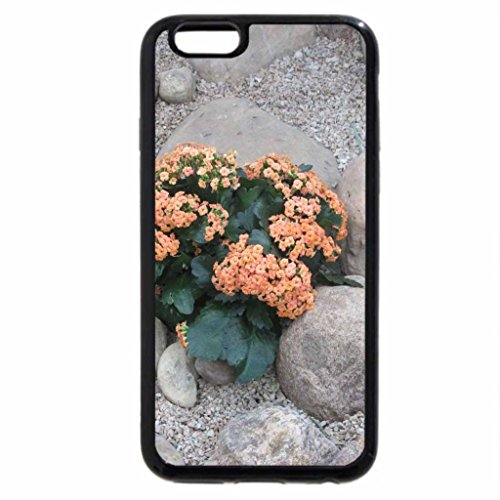 iPhone 6S / iPhone 6 Case (Black) Photography day with my flowers 38