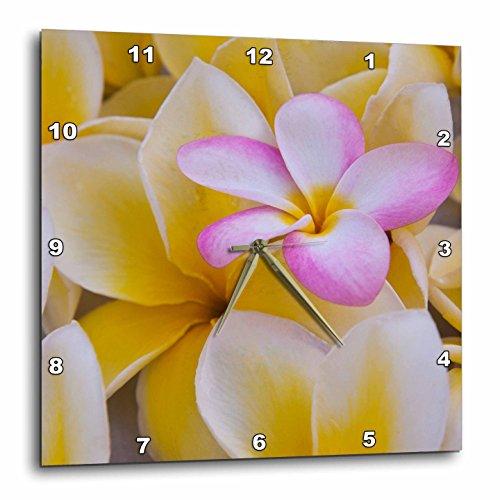 3D Rose USA-Hawaii-Oahu-Plumeria Flowers Blooming Wall Clock, 15'' x 15'' by 3dRose