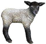 "Walls of the Wild Lamb 22"" x 22"""