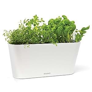 aquaphoric herb garden tub self watering passive hydroponic planter fiber soil. Black Bedroom Furniture Sets. Home Design Ideas