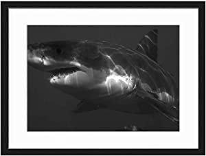 Wood Framed Canvas Artwork Home Decore Wall Art (Black White 20x14 inch) - Great White Shark Shark Jaws Fish Dangerous
