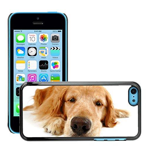 Premio Sottile Slim Cassa Custodia Case Cover Shell // V00002231 funny dog // Apple iPhone 5C