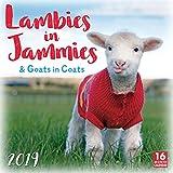 Lambies in Jammies & Goats in Coats 2019 Wall Calendar, 12 x 12, (CA-0446)
