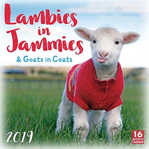 Top 10 goats in coats calendar for 2019