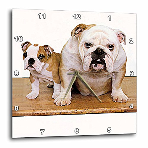 3dRose dpp_8578_2 British Bulldog Male-Wall Clock, 13 by (Bulldog Clock)