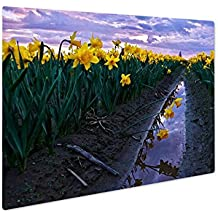 Ashley Giclee Metal Panel Print, Daffodils Fild At Sunset And Reflection In Water, Wall Art Decor, Floating Frame, Ready to Hang 16x20, AG6541009