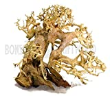 Bonsai Driftwood Aquarium Tree AS LEFT SIDE (6in H x 8in L) Natural, Handcrafted Fish Tank Decoration | Helps Balance Water pH Levels, Stabilizes Environments | Easy to Install