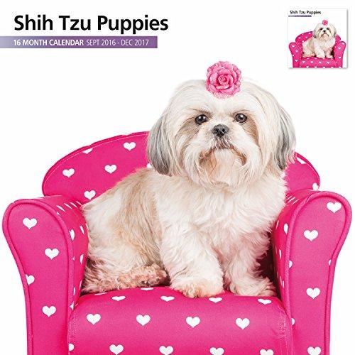 Magnet & Steel 2017 Shih Tzu Puppies Calendar, Wall Calendar