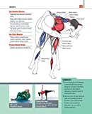The Anatomy of Martial Arts: An Illustrated Guide