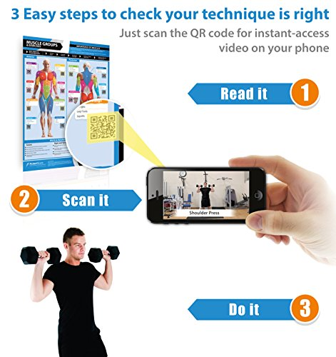 Gym & Exercise Workout Posters | Anterior & Posterior
