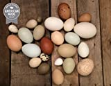 Variety of Two Dozen Clean, Organic Eggshells. Part of the Martha Stewart American Made Market
