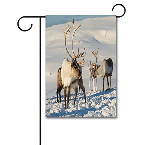 (Wondertify Garden Flags Winter Reindeers Natural Environment Tromso Northern Norway Caribou Antler Wildlife Double Sided House Decoration Polyester Garden Flag 18 X 27 Inches)