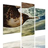 Alonline Art - Seabird Flying in Sky Split 3 Panels Framed Stretched Canvas (100% Cotton) Gallery Wrapped - Ready to Hang | 33''x22'' - 84x56cm | 3 Panels Combination Framed Artwork Framed Wall Art