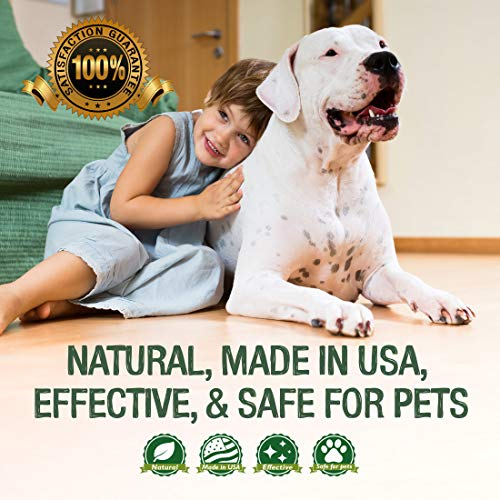 Professional Strength Stain & Odor Remover - Natural Enzyme Cleaner (Bulk 32oz) for Dog & Cat Urine, Waste, Wine, Blood, Vomit, etc. Safe & Effective Pet Smell Eliminator for Carpet, Hardwood & More