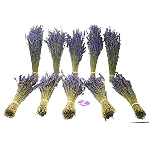 """Findlavender - Culinary Lavender Bundles - 11-14"""" Long - Can Be Used for Any Ocassion - Perfect for Your Wedding! - 10 Bundles 110"""